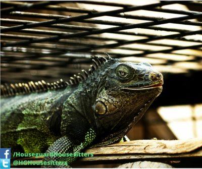 Reptile Care - Houseguard Housesitters - Pet Sitting Winnipeg, Manitoba