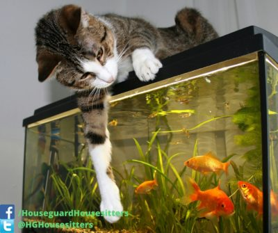 Fish Care - Houseguard Housesitters - Pet Sitting Winnipeg, Manitoba