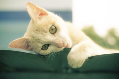 Cat Quirks and Behaviour - Houseguard Housesitters - Pet Sitting Winnipeg, Manitoba